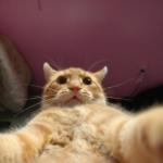 selfie gatto
